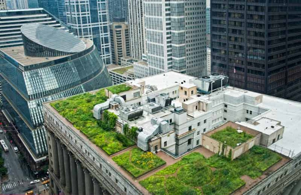 Chicago City Hall Green Roof
